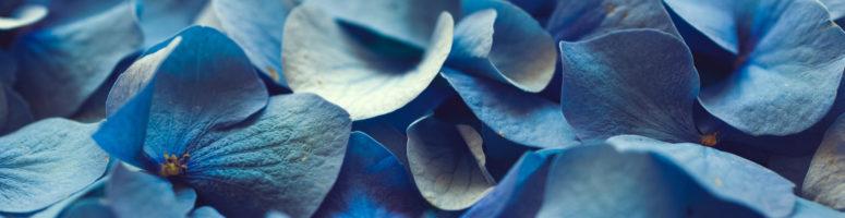BlueJeans Update (Sept 2020)
